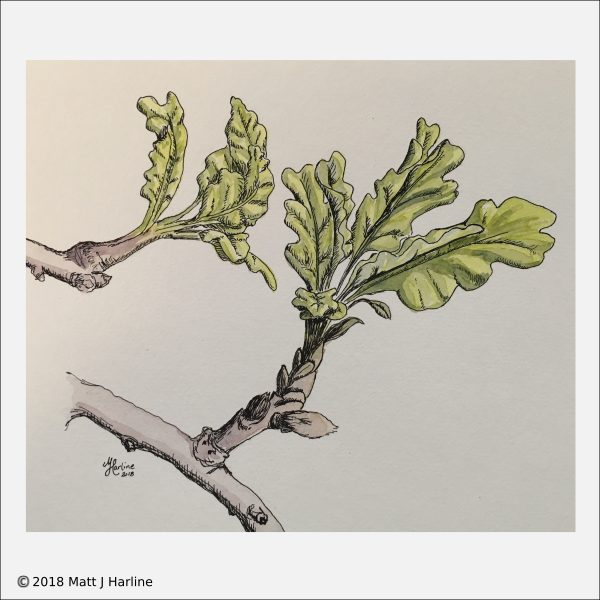mixed-media-new-oak-leaves