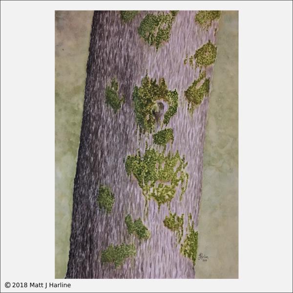 watercolor-valley-oak-trunk