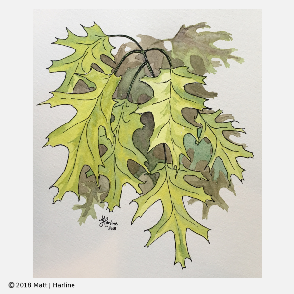 watercolor-young-oak-leaves